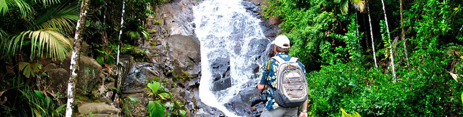banner image waterfall