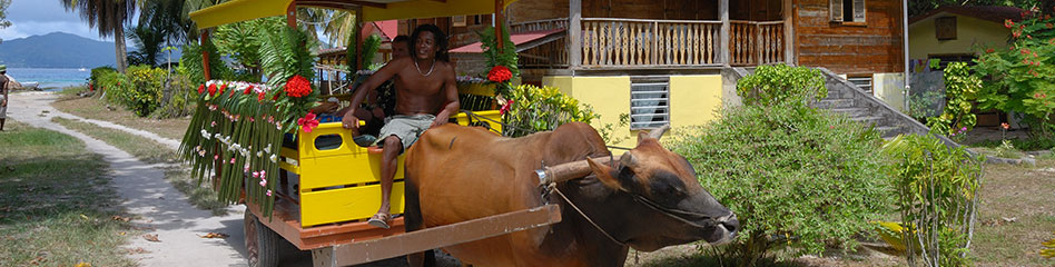 banner image ox cart